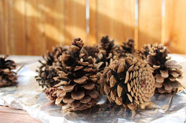 how-to-disinfect-pinecones-for-crafts